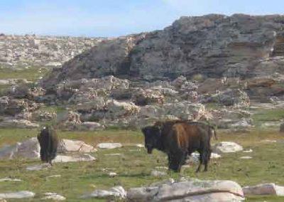 Private Tour Destination: Antelope Island